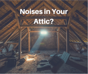 What Are Those Noises In The Attic Critter Control Cape Cod